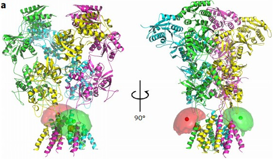 The structure–energy landscape of NMDA receptor gating