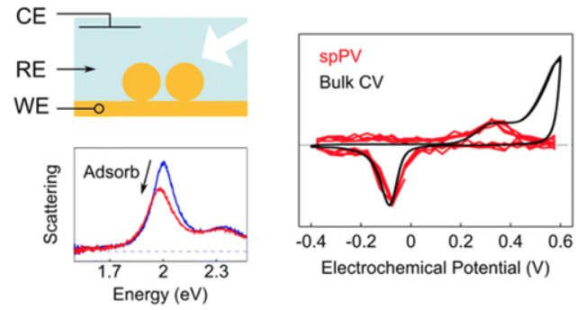 Single-Particle Plasmon Voltammetry (spPV) for Detecting Anion Adsorption