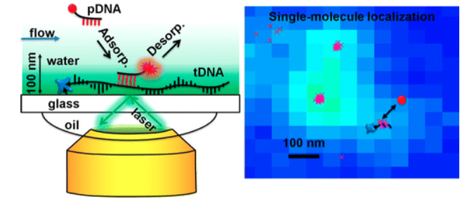 Super-Resolution mbPAINT for Optical Localization of Single-Stranded DNA