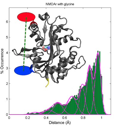 Conformational Transitions in the Glycine-Bound GluN1 NMDA Receptor LBD via Single-Molecule FRET
