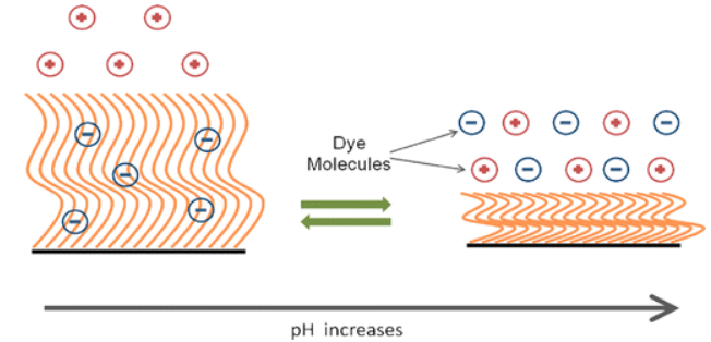 On the pH-Responsive, Charge-Selective, Polymer-Brush-Mediated Transport Probed by Traditional and Scanning Fluorescence Correlation Spectroscopy