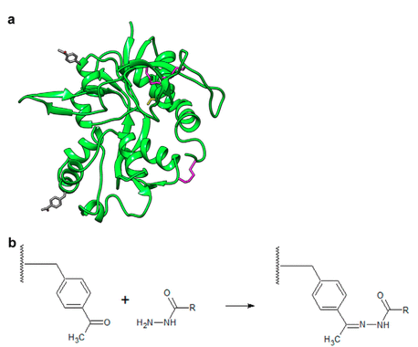 Structural Dynamics of the Glycine-binding Domain of the N-Methyl-D-Aspartate Receptor