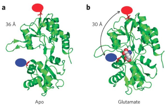 Structural landscape of isolated agonist-binding domains from single AMPA receptors