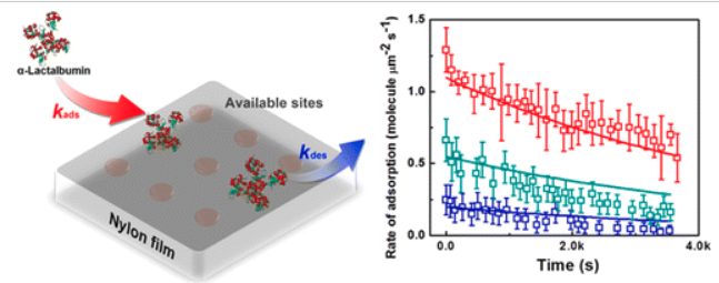 Single-Molecule Kinetics of Protein Adsorption on Thin Nylon-6,6 Films